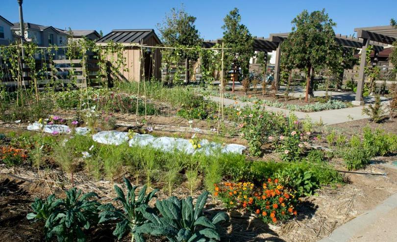 Sendero Farm 2